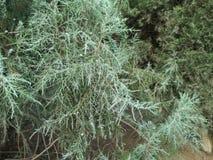 Zieleń opuszcza teksturę Piękni zieleń liście, zieleni deseniowy tło - wizerunek fotografia royalty free