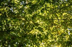 Zieleń opuszcza w parku na pogodnym jesień dniu fotografia royalty free