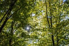 Zieleń opuszcza w parku na pogodnym jesień dniu obraz stock