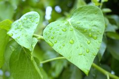 zieleń piękni liść Zdjęcia Royalty Free