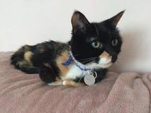 Zieleń Przyglądający się Żeński kot fotografia royalty free