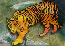 Zieleń przyglądający się tygrys Fotografia Royalty Free