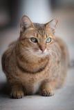 Zieleń Przyglądający się Uliczny kot Obrazy Royalty Free