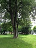 Zieleń Pusty park z dużym drzewem w środku Fotografia Stock