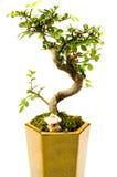 Zieleń puszkująca roślina Zdjęcia Stock