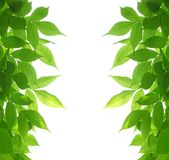 zieleń ramowi liść Fotografia Stock