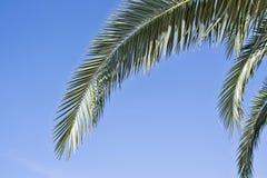 Zieleń rozgałęzia się przeciw niebieskiemu niebu zdjęcia royalty free