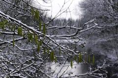 Zieleń sia obwieszenie na zamarzniętym drzewie Zdjęcie Royalty Free