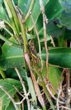 Zieleń w roślina i zwierzę obraz stock