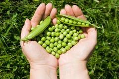 zieleń wręcza mienia grochów s kobiety Zdjęcia Royalty Free
