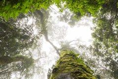 Zieleń zakrywający drzewny bagażnik w mgle Obrazy Stock
