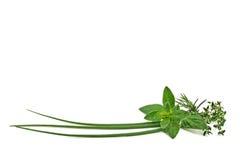 ziele świeże pikantność obrazy royalty free