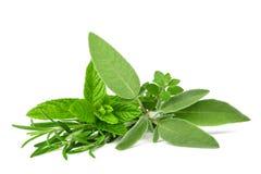 ziele świeże pikantność zdjęcie stock