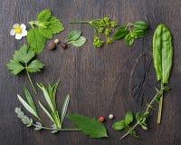 ziele świeże pikantność obraz stock