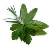ziele świezi liść Fotografia Stock