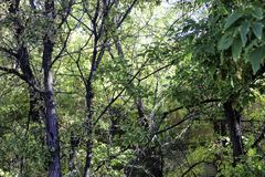 Zieleń, zieleń, zieleń Zdjęcie Stock