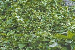 ziele Obrazy Stock