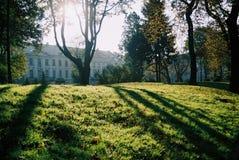 zieleń Zdjęcie Royalty Free