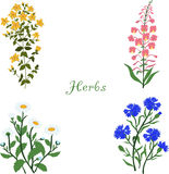 Ziele, Hypericum, Angustifolium, chamomile, cornflowers, ilustracja Zdjęcia Royalty Free