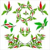 0416_61 ziele i Dziki kwiat Zdjęcia Royalty Free
