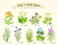 Ziele I Dzikich kwiatów tła set ilustracja wektor