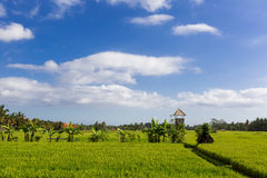 Zieleń i Gold Fields, niebieskie nieba Zdjęcia Royalty Free