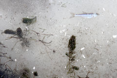 Ziele i ryba w rzecznym lodzie Zdjęcie Royalty Free