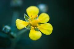 Zieleń i Żółty kwiat Makro- Obrazy Royalty Free