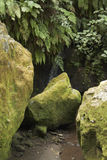 Zieleń kamienie w ogródzie Fotografia Stock