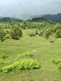 Zieleń krajobrazy zdjęcia stock