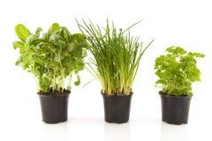 ziele kuchenni Obrazy Stock