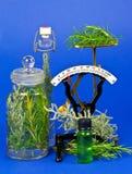 ziele kulinarna medycyna Obrazy Stock