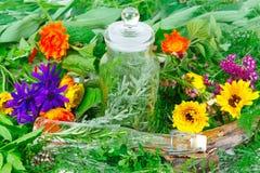 ziele kulinarna medycyna Zdjęcie Stock