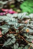 Zieleń leafs natura zwrotnik Zdjęcie Stock