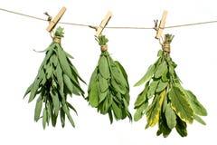 ziele leczniczy Zdjęcie Stock