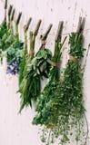 ziele leczniczy Obraz Stock