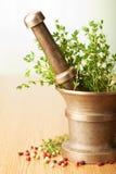 ziele moździerzowi Zdjęcie Stock
