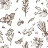 Ziele nakreślenia wzoru tło Wektorowy bezszwowy projekt ziołowa herbata ilustracji