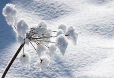 ziele śnieg Zdjęcie Stock