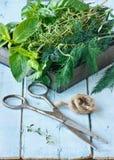 ziele nożyce obraz stock