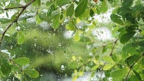 Zieleń opuszcza tło, wodne kropelki na szklanym okno Fotografia Stock
