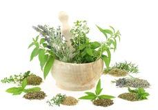 ziele pikantność Fotografia Stock