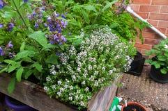 Ziele rośliny w kwiacie Obrazy Royalty Free