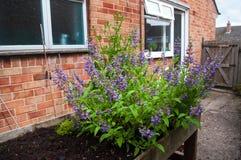 Ziele rośliny w kwiacie Zdjęcia Stock