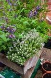 Ziele rośliny w kwiacie Obraz Royalty Free