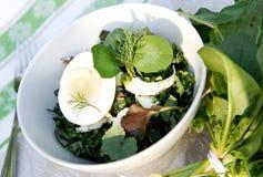 ziele sałatkowa wiosna lato świrzepa Obraz Royalty Free