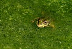 ZIELEŃ W zieleni zdjęcia royalty free