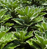 zieleń zasadza unikalnego Zdjęcia Royalty Free