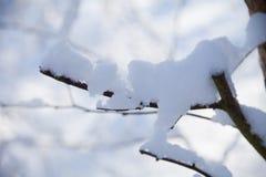 Zieleinheit des Schnees landscape Stockfotos