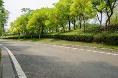 Zieleniści drzewa blacktop drogą w pogodnym lecie zdjęcia stock